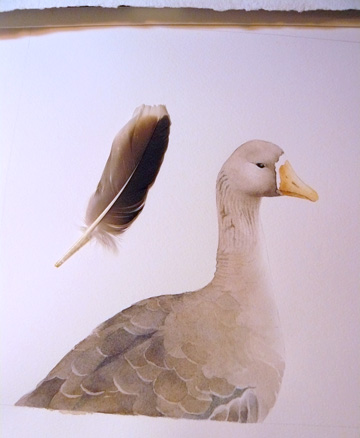 Goose watercolor