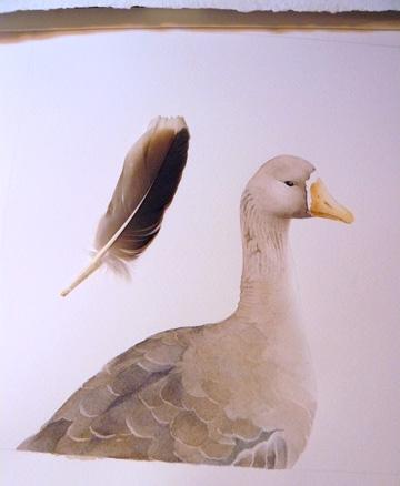 Goose watercolor