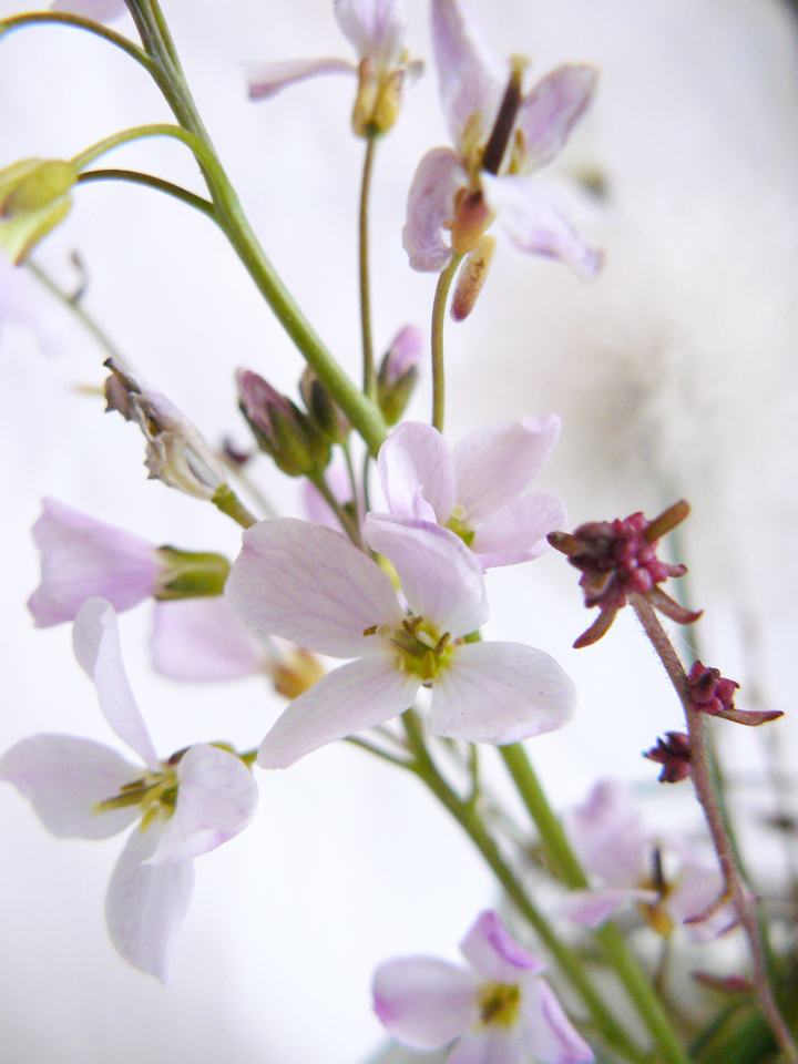 Tinyflowers